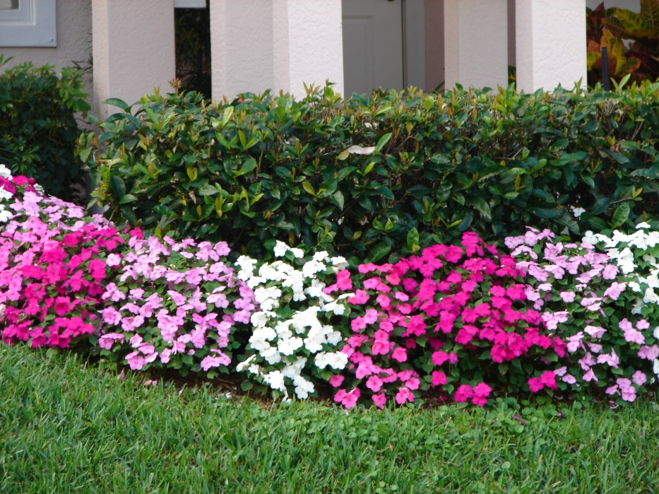 Bedding Plants Weeds And Seeds