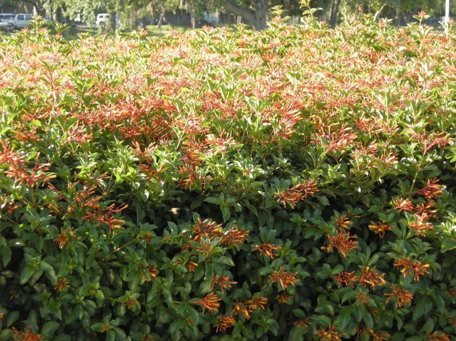 Garden Bush: Weeds And Seeds